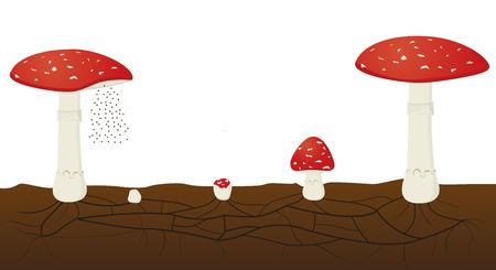 cycle de vie du champignon isolé sur fond blanc. Vecteurs
