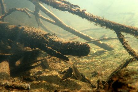 ecosistema: paisaje bajo el agua en el río y peces pequeños.