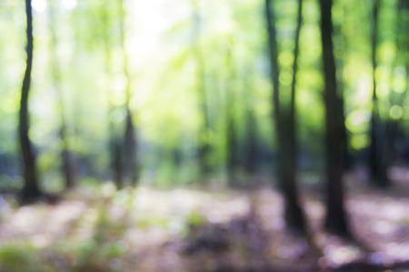 dia soleado: Árboles enmascarada en el día soleado. Fondo del bosque