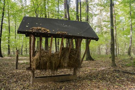 animales del bosque: Alimentador de animales del bosque