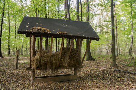 feeder: Feeder for forest animals