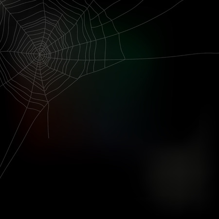 netting: Spider web isolated on dark background, vector illustration