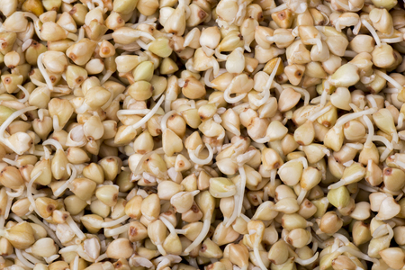 Sprouts of buckwheat groats as a background