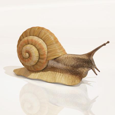 rendering: snail, 3d rendering