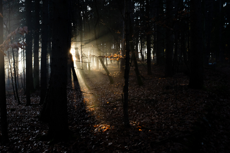 Sunrays bursting through the forest from behind a tree Фото со стока