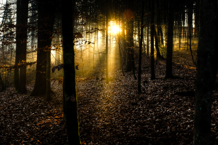 Sunrays bursting through the forest