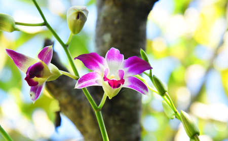 Beautiful type of orchid flower.