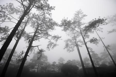 Grey Jungle photo