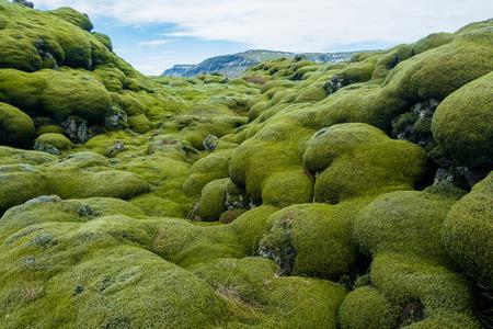 etiquette voyage: Champ de lave Islande recouverte de mousse verte de l'éruption du volcan Banque d'images