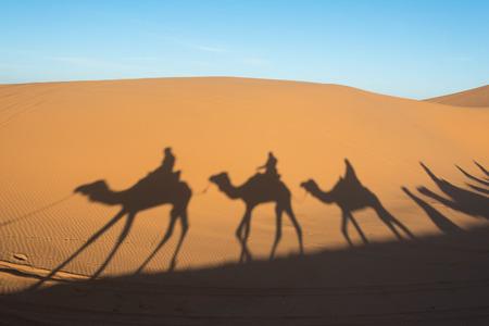 Kameel schaduw op de zandduin in de Sahara woestijn, Marokko
