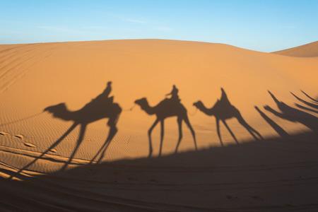 arab beast: Camel shadow on the sand dune in Sahara Desert, Morocco