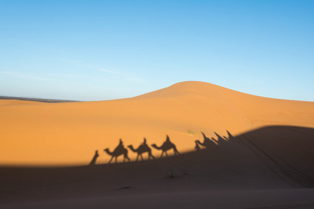 camel silhouette: Camel shadow on the sand dune in Sahara Desert, Morocco