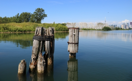 Remnants of old dock pilings against a partial view of the City of Toronto skyline. photo