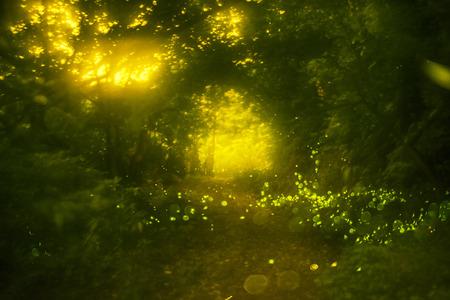 firefly: Firefly