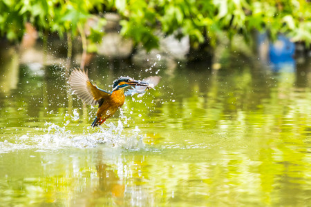 Kingfisher Banque d'images - 31386438