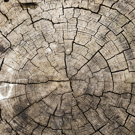 oak wood: Wood  Stock Photo