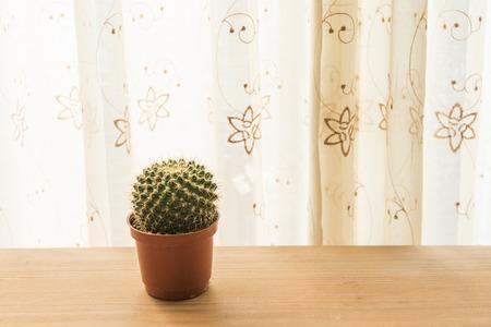 furnishings: Home furnishings cactus