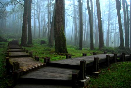 National Forest pretpark in Taiwan, Chiayi - Alishan Stockfoto - 34900219
