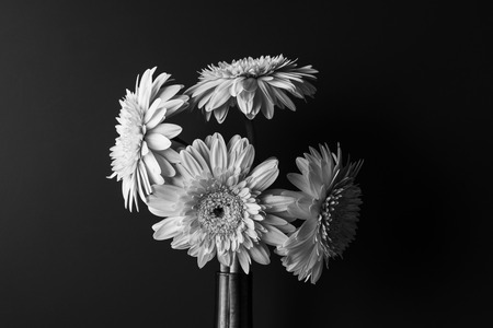 Black and white flower in bloom over black background stock photo black and white flower in bloom over black background stock photo 51012228 mightylinksfo