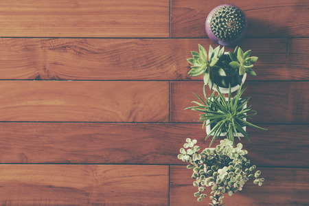 white wall: Indoor plant on wooden table and white wall