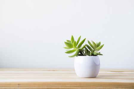 Indoor plant op houten tafel en witte muur