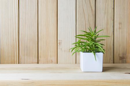 plantes d'intérieur sur la table en bois et mur en bois