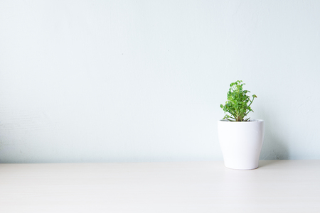 Plantes d'intérieur sur la table en bois et mur blanc Banque d'images - 55528716