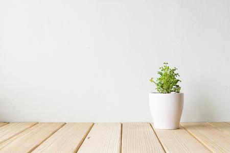Binnenplant op houten lijst en witte muur Stockfoto - 55512805