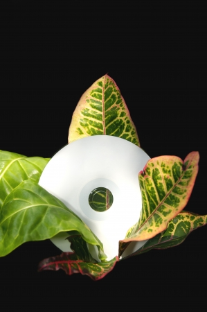 A blank white cd disk resting in the middle of a tropical plant