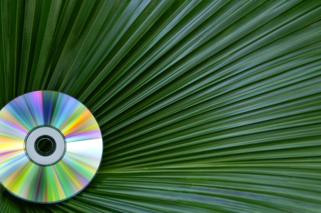 A colorful cd-rom in front of a green palmate palm frond