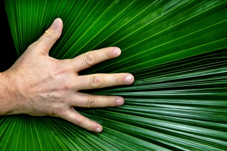 Man's hand resting on a palmate pond frond. photo