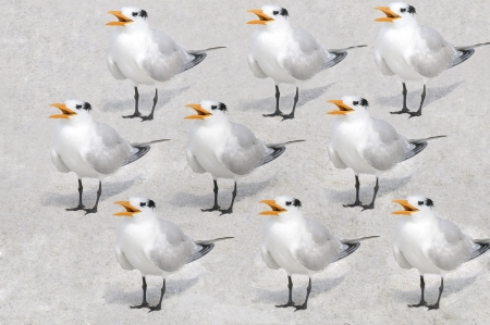 repeated: Repeated pattern of royal terns against a sandy background.