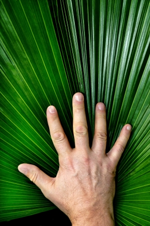 palmate: Vertical image of a mans hand resting on a palmate pond frond.