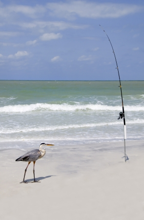 Great blue heron standing in front of a fishing pole at the ocean. photo