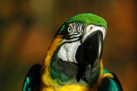 Parrot Stock Photo - 6847511
