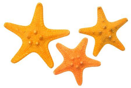 Three small  starfish. Stock Photo