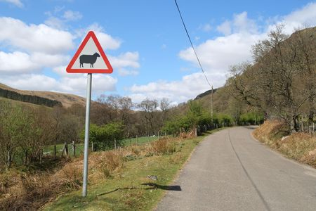 A country road in the Elan Valley, Wales with a sheep warning sign. photo