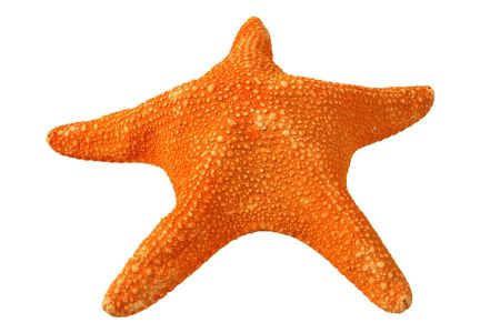 Orange starfish, isolated on a white background Stock Photo - 931660