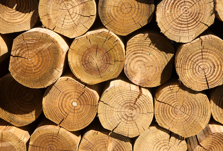 Close up of a stack of cut logs. Stock Photo - 1573401