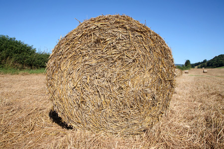 A round straw bale in a field. photo