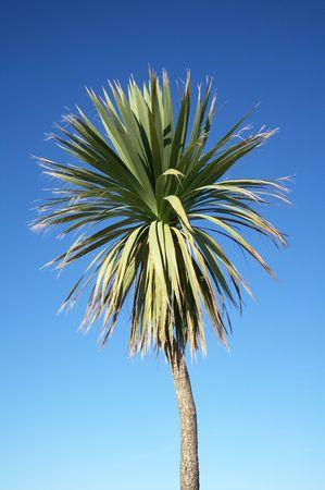 Palm tree and a blue sky. Stock Photo - 2100268