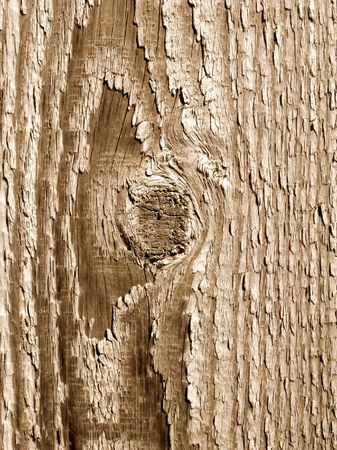 Wood knot and texture close up. photo