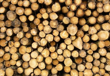 Close up of stacked cut forest tree logs. Stock Photo - 3582945