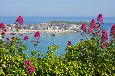St. Ives wild red Valerian (Centranthus ruber), Cornwall UK. Stock Photo - 4967900