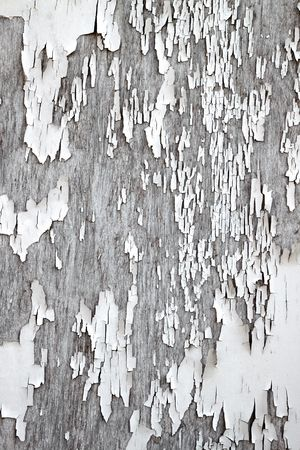 flaky: Old flaky white paint peeling off a wooden fence.