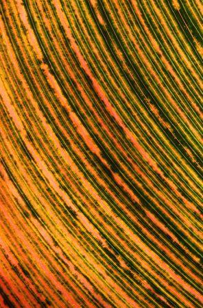 changing color: Primer plano de una hoja tropical cambiando de color.