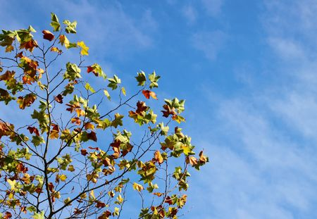 changing color: Autumn leaves changing color and blue sky. Stock Photo