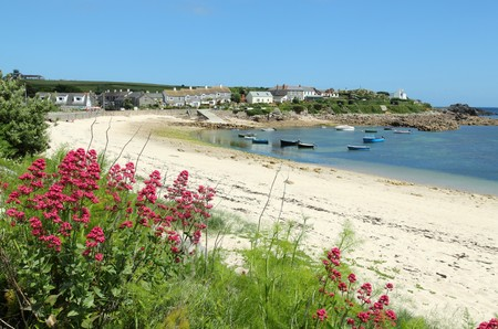 mary's: Old town beach red valerian, St. Marys, Isles of Scilly, Cornwall UK. Stock Photo