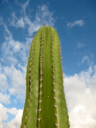 spiky: Large spiky green cactus plant. Stock Photo