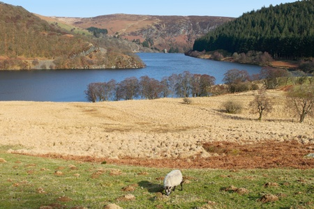 elan: PenyGarreg reservoir, Elan Valley Wales UK.
